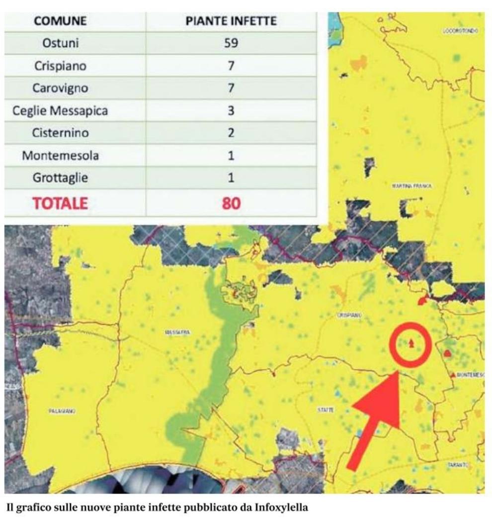 Mappa Xylella Puglia.La Xylella Avanza Verso Ovest Direzione Matera Altri 80 Nuovi Ulivi Infetti