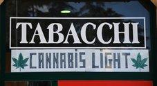 Cannabis, 2.087 punti vendita in Italia: coltivati 58,5 ettari