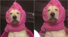 La serenità di questo cane... sotto la doccia: il video è virale