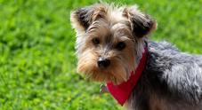 Compra un cucciolo di razza su un noto sito, che muore dopo pochi giorni: poi scopre la verità