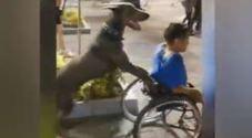 Il cane spinge il padrone sulla carrozzina: il video virale