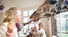 Colazione con le giraffe e pisolino tra i leoni in Africa