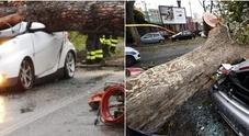 A Roma strage di alberi, traffico in tilt