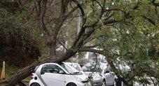 Il maltempo secondo Diaco (M5S): «Noi più bravi di Alemanno, nel 2012 caduti il triplo degli alberi»