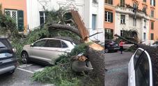 Più di 100 alberi caduti soltanto nel I Municipio da Prati al centro