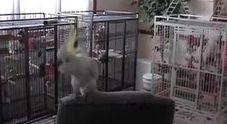 Il pappagallo rocker che ama i Queen