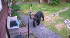 Cane coraggioso scaccia così l'orso entrato in casa