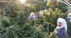 """Ecco le """"Sisters of the valley"""", le suore hippie che coltivano cannabis in California"""