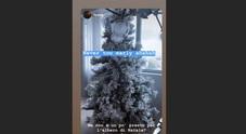 Chiara Ferragni, ecco l'albero di Natale dei Ferragnez. Fedez: «Ma non è un po' presto?»
