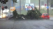 Milano, bomba d'acqua: pioggia violentissima, allagamenti, alberi e rami spezzati