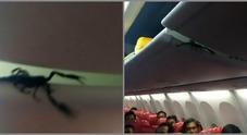 Choc in aereo, scorpione gigante sulla testa dei passeggeri