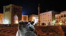 Un gorilla nel centro di Lecce, paura e mistero nel cuore della movida