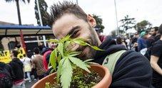 Spinelli giganti e piantine sotto braccio: a Roma sfila il corteo per la marijuana libera