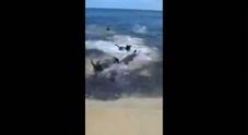 Cani attaccano due grossi squali a pochi metri dalla spiaggia Video