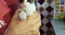 La gattina è intrappolata: salvata dai vigili del fuoco