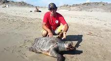 Focene, tartaruga morta in spiaggia: soffocata dalla plastica