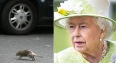 Topi invadono Buckingham Palace, Regina Elisabetta «inorridita»: task force anti-ratto