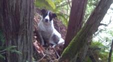 Muore d'infarto nel bosco: il suo cane gli resta accanto fino all'arrivo dei soccorsi