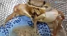 Il granchio mangia-spaghetti star sul web