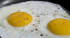 Uova pericolose per la salute: allerta colesterolo per il cuore, ombre da nuovo studio