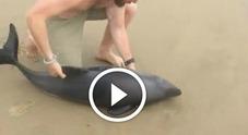 L'incredibile salvataggio del cucciolo di delfino ha commosso il web