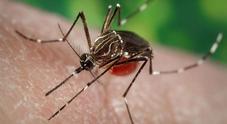 Zanzare, il virus mortale trasmesso che colpisce il cervello: i sintomi