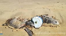 Intrappolate per giorni dalle lenze: due tartarughe salvate in extremis