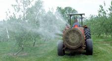 Xylella, dai sindaci stop ai pesticidi: è rivolta in tutta la Puglia