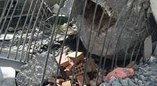 Anche i cani dei vigili del fuoco del Lazio al lavoro tra le macerie