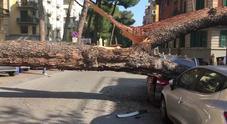 Enorme pino caduto a Corso Trieste, due auto distrutte