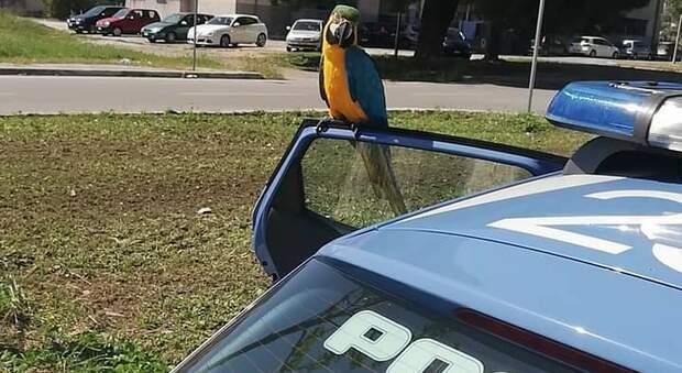 Il pappagallo Pedro