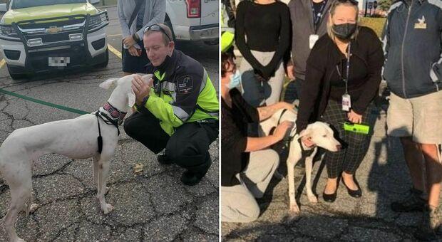 Il cane in fuga manda in tilt l'aeroporto: tutto bloccato, gli aerei restano a terra per un'ora