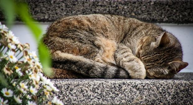 Uk, 5 anni di reclusione al killer di gatti