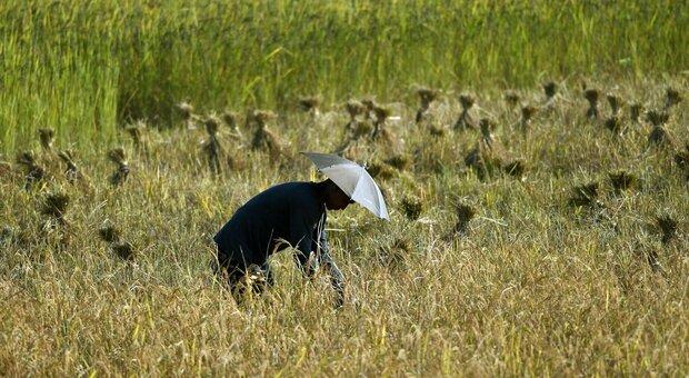 Neonato abbandonato e sepolto vivo: orrore in una fattoria indiana