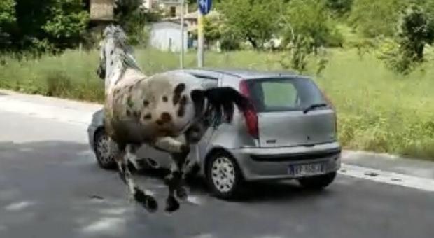 Il povero cavallo trascinato da una vettura