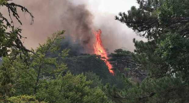Allarme incendi nel Sud Italia, bruciano Sicilia e Calabria: più di 400 interventi in un solo giorno
