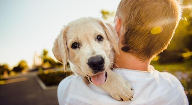 Legame tra cani e padroni è come quello tra bambini e genitori