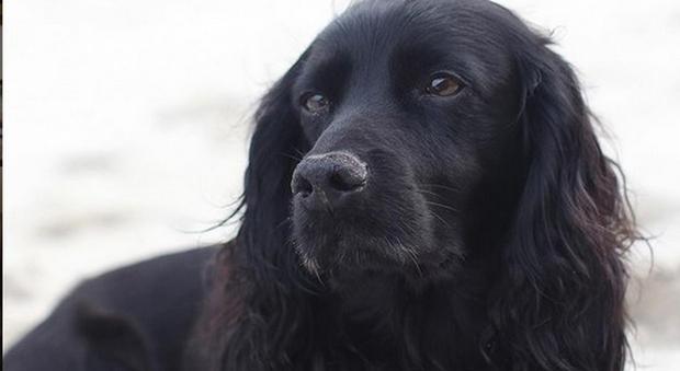 Lupo, il cane del principe William e Kate Middleton