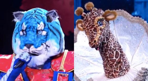 Il Cantante Mascherato, svelato chi c'è dietro Tigre Azzurra e Giraffa: qualcuno aveva indovinato