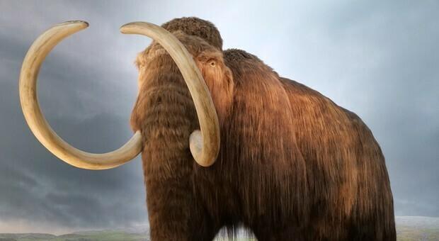 Usa: 15 milioni di dollari pronti per riportare in vita i Mammut