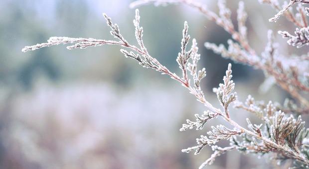 Gelo polare sulle montagne del Veneto (Foto di StockSnap da Pixabay)