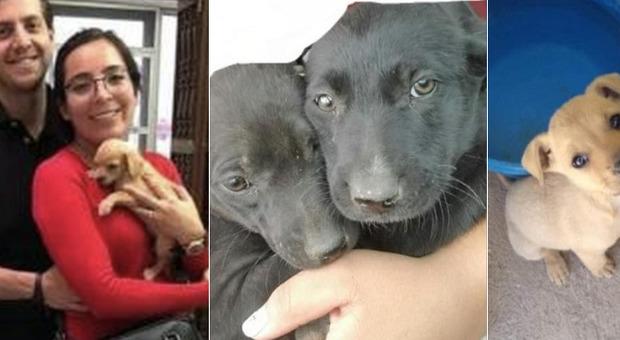 La coppia adotta 16 cuccioli, ma i cani spariscono: l'agghiacciante scoperta dei volontari animalisti