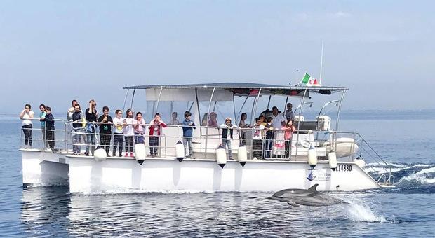 Taranto Dolphin Sanctuary, dal prossimo anno i primi esemplari popoleranno il Santuario dei delfini