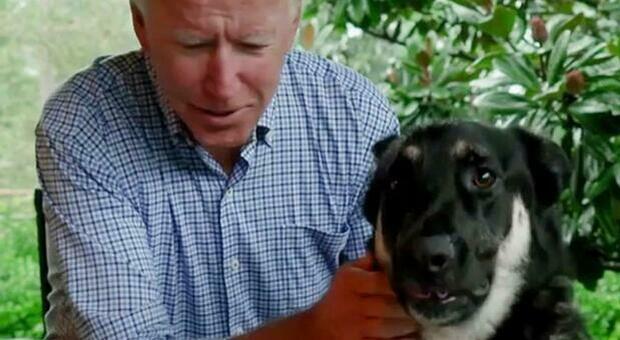 Biden con il cane