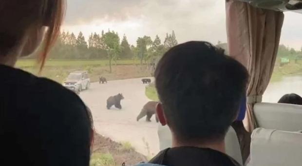 Guardiano ucciso dagli orsi allo zoo di Shanghai.( Un fotogramma del video amatoriale diffuso su Weibo e ripreso da BBC, ABC e altri)