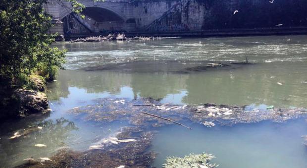 Studente 13enne cade nel fiume mentre va a scuola, interviene la polizia: «È scomparso»