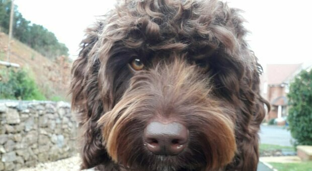 Il cane Digby (Twitter)