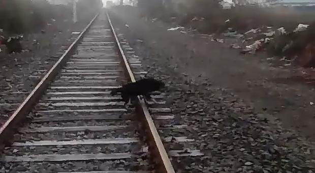 Il cane legato ai binari salvato dal macchinista del treno, Andres Fabricio Argandona Tapia che lo ha pubblicato su FB)