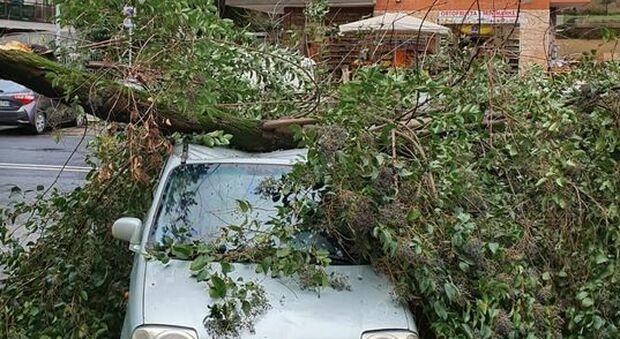 Ostia, albero cade su un'auto con un 5 persone a bordo: ferito anche un neonato