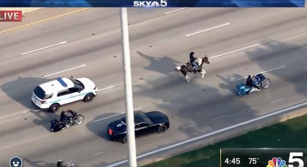 Uomo scappa a cavallo dalla polizia in autostrada: l'inseguimento ripreso in diretta tv Video